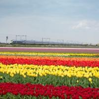 Eurostar Launches London to Amsterdam Service