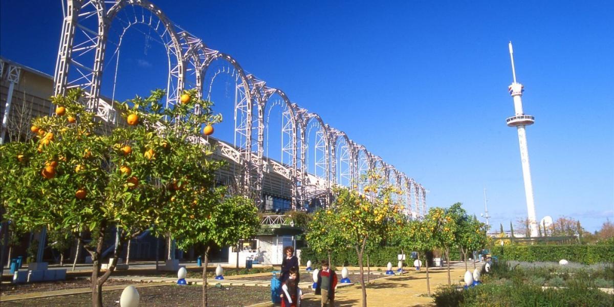 Orange trees in Seville