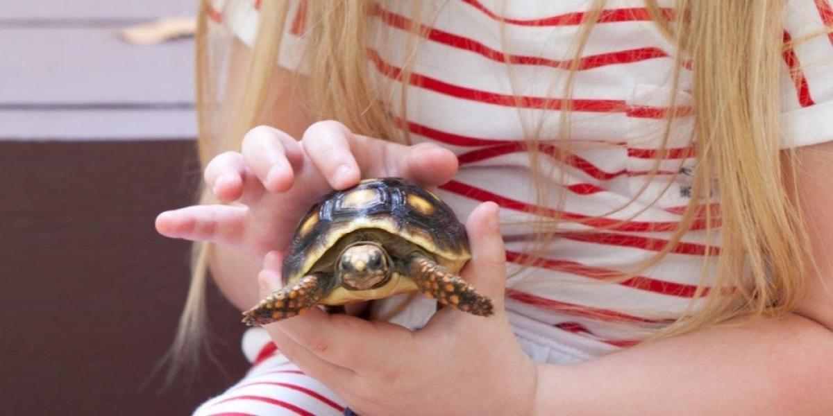 Discovering turtles at Tamarind, Barbados.