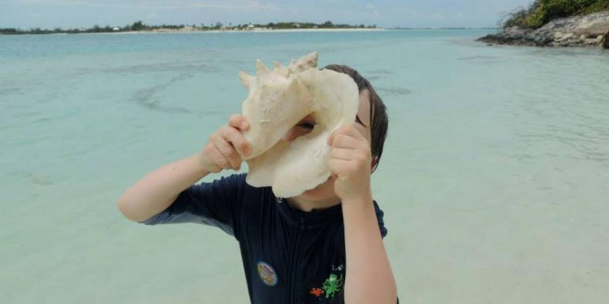 Finding conch shells.