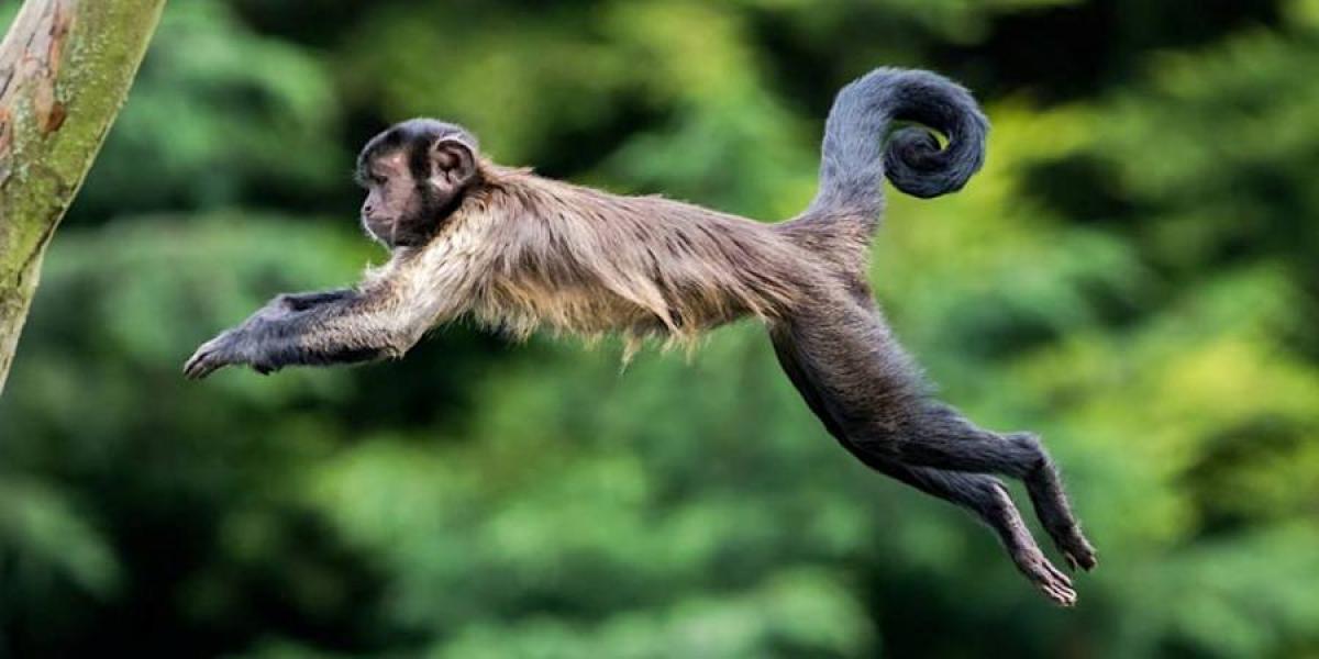 Monkey fun at Edinburgh Zoo.
