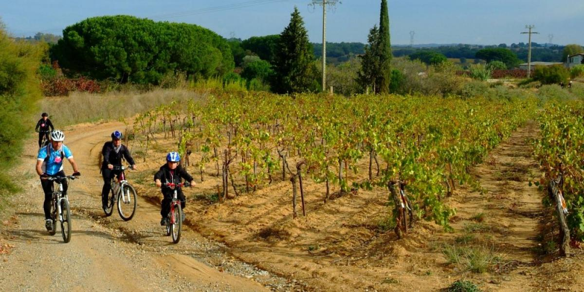 Cycling in the Languedoc