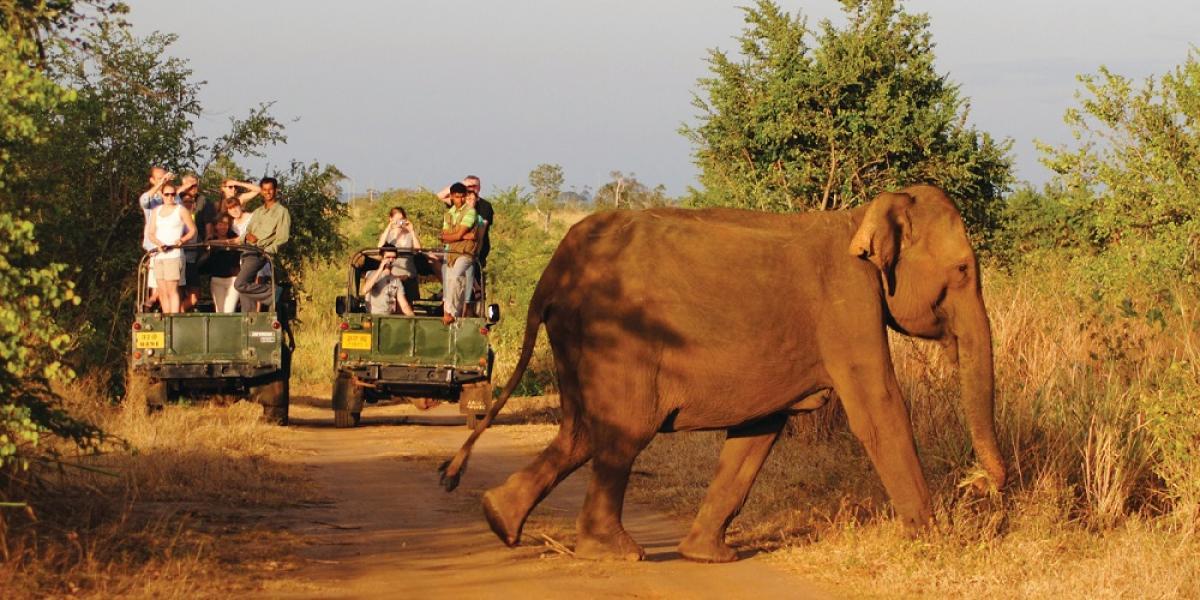 Elephants at Yala National Park.