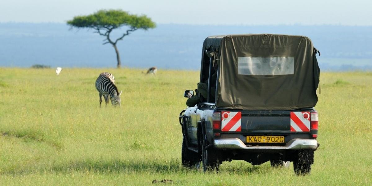 Zebra on safari, Kenya