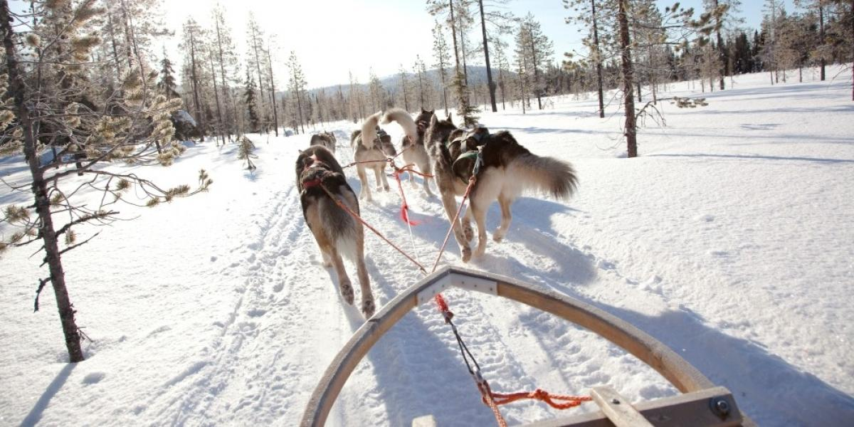 Husky-sledding in Lapland.