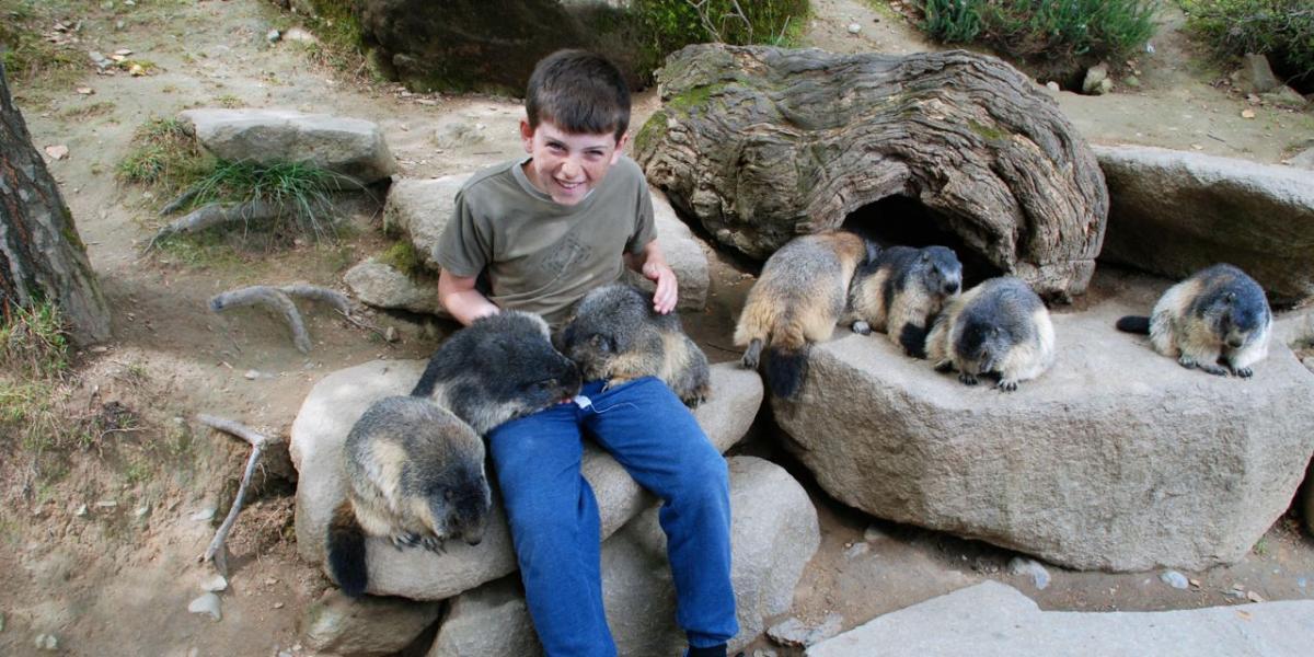 Feeding marmots at the Parc Animalier.