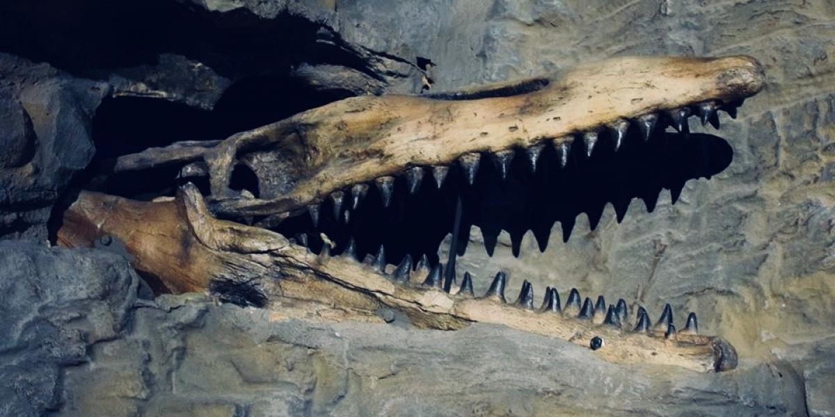 Mosasaur at the Loch Ness Centre & Exhibition.
