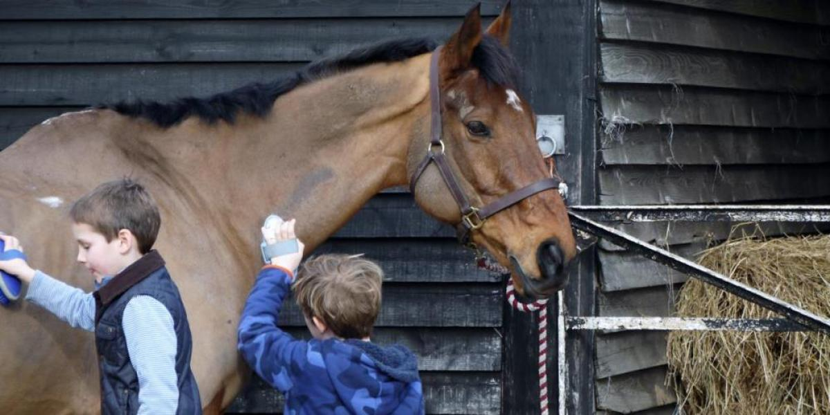 Horse grooming at College Farm.