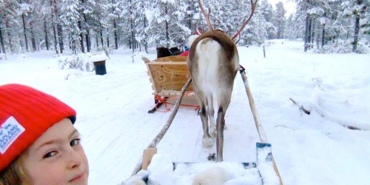 Ripley in a reindeer sleigh in Lapland.