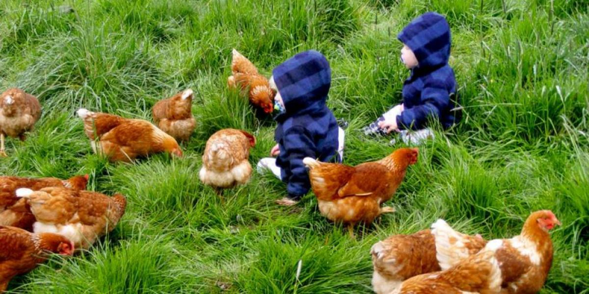 Playing amongst the chickens at Wambrook Farm.