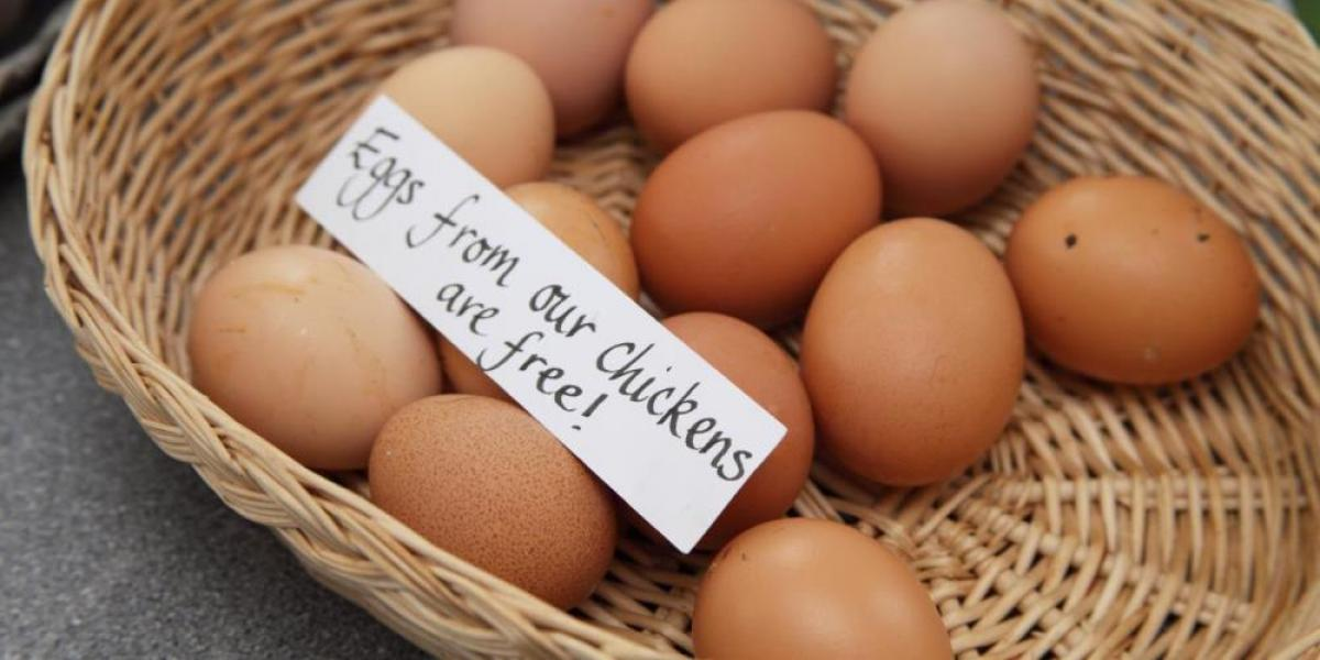 Daily fresh eggs at Warren Collection.