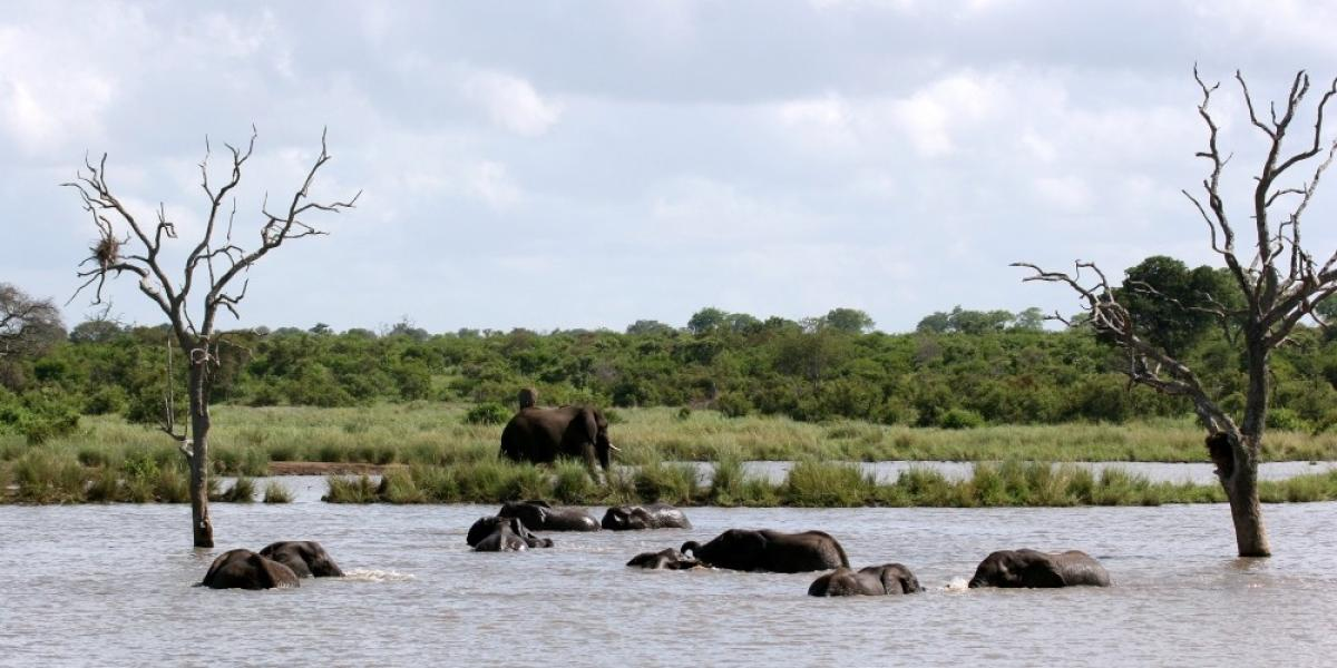 Elephants playing in the water, Kruger