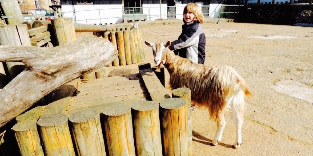 Meeting the animals at Surrey Docks Farm, London.