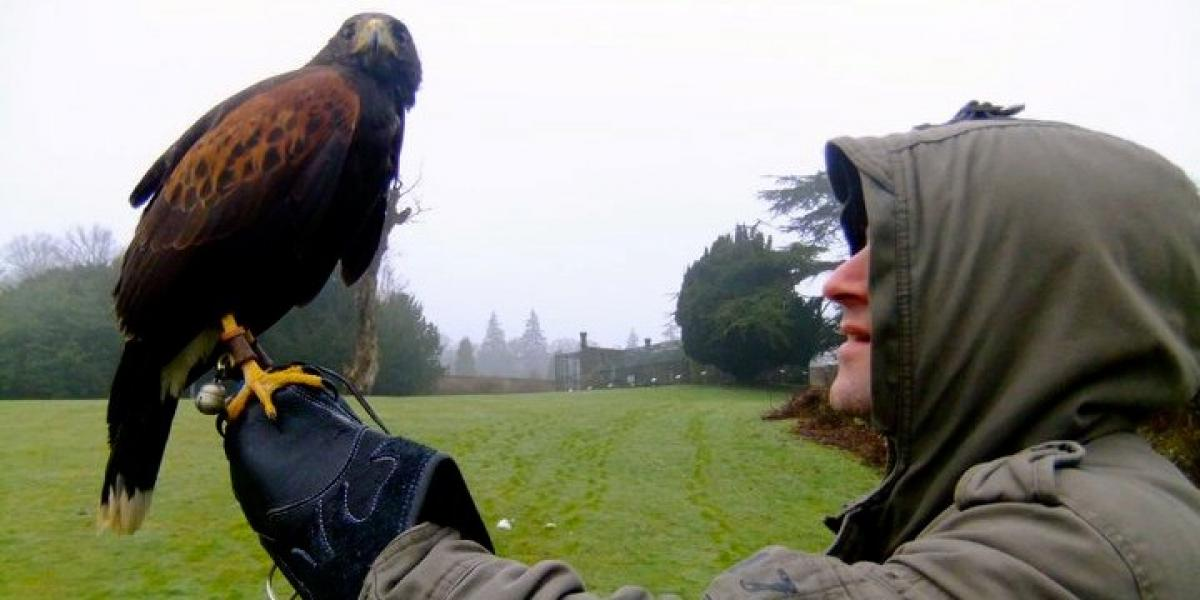 A session with the falconer at Swinton Park.