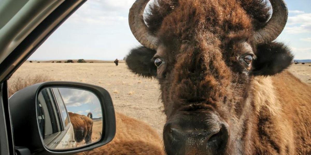Bison, South Dakota.