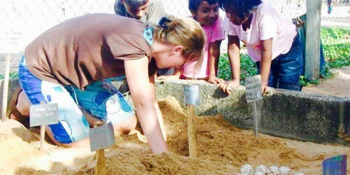 Working with sea turtle eggs in Sri Lanka with Responsible Travel.