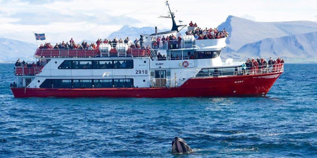 © Elding Whale Watching Reykjavík.