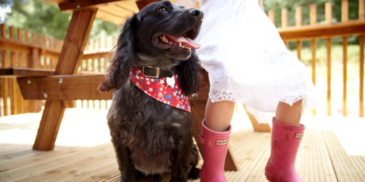 Dog-friendly lodges with Forest Holidays and Cropton Cabins.